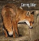 Carreg-Lafer-Y-Cadno