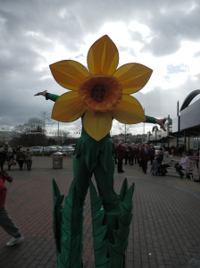 St David's Day 2014 daffodil